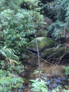 Caminho das Águas e Monte Verde